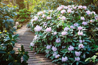 Rhododendronpark -
